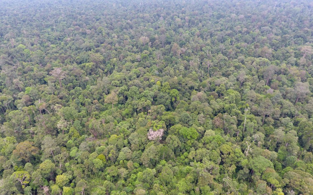 Hutan Penjaga Iklim untuk Lingkungan Hidup
