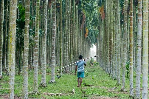 Hutan Untuk Masa Depan