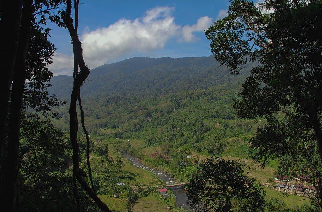 Keistimewaan Hutan Adat Desa Rantau Kermas