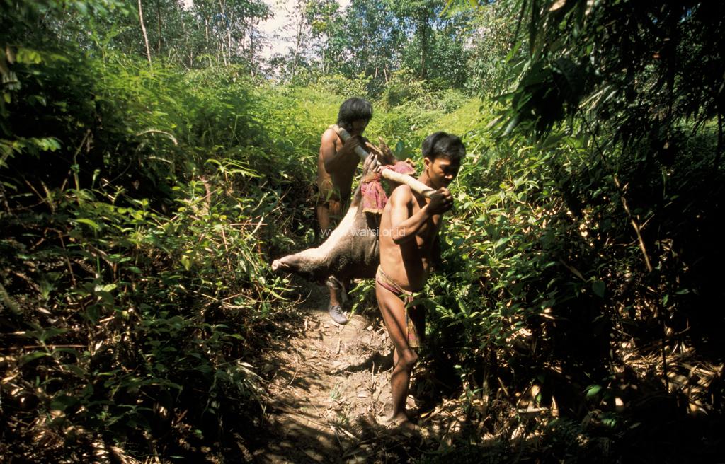 Orang Rimba Di Luar Hutan Paling Terdampak Covid-19