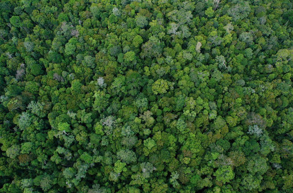 Insentif Ekologi untuk Lingkungan Hidup