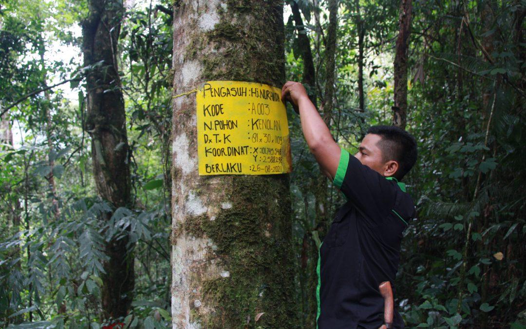 Donasi Hari Hutan Untuk Pohon Asuh